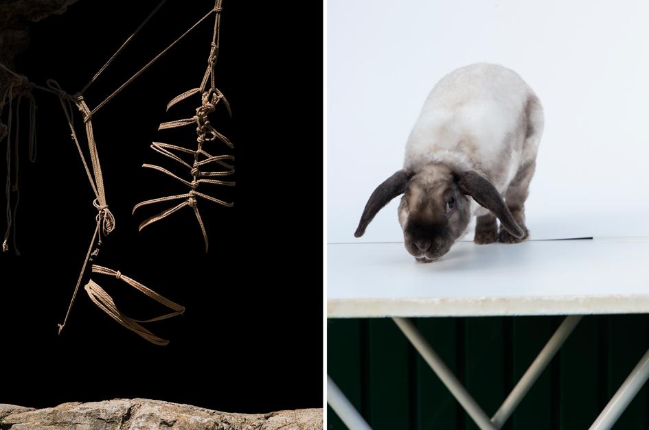 bugs_bunny2