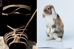 bugs_bunny1